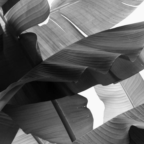 ahmoy banana leaf print